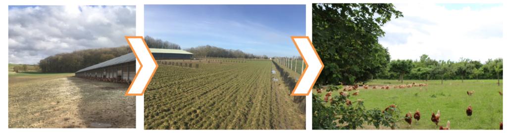 évolution parcours arboré volailles - Associer agroforesterie et élevage