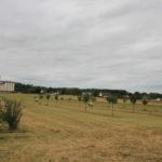Plantations - Associer agroforesterie et élevage