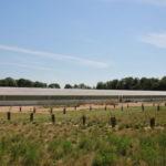 Formation - Associer agroforesterie et élevage