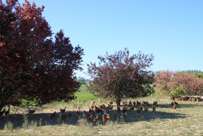 agroforesterie - association Poul'Haies Arbres