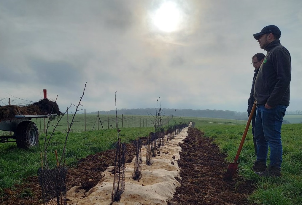 Plantations - Agroforesterie